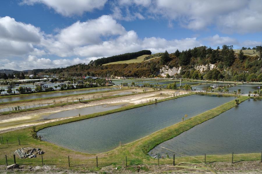 Viaggio in nuova zelanda con escursione a taupo presso il for Vasche per allevamento trote